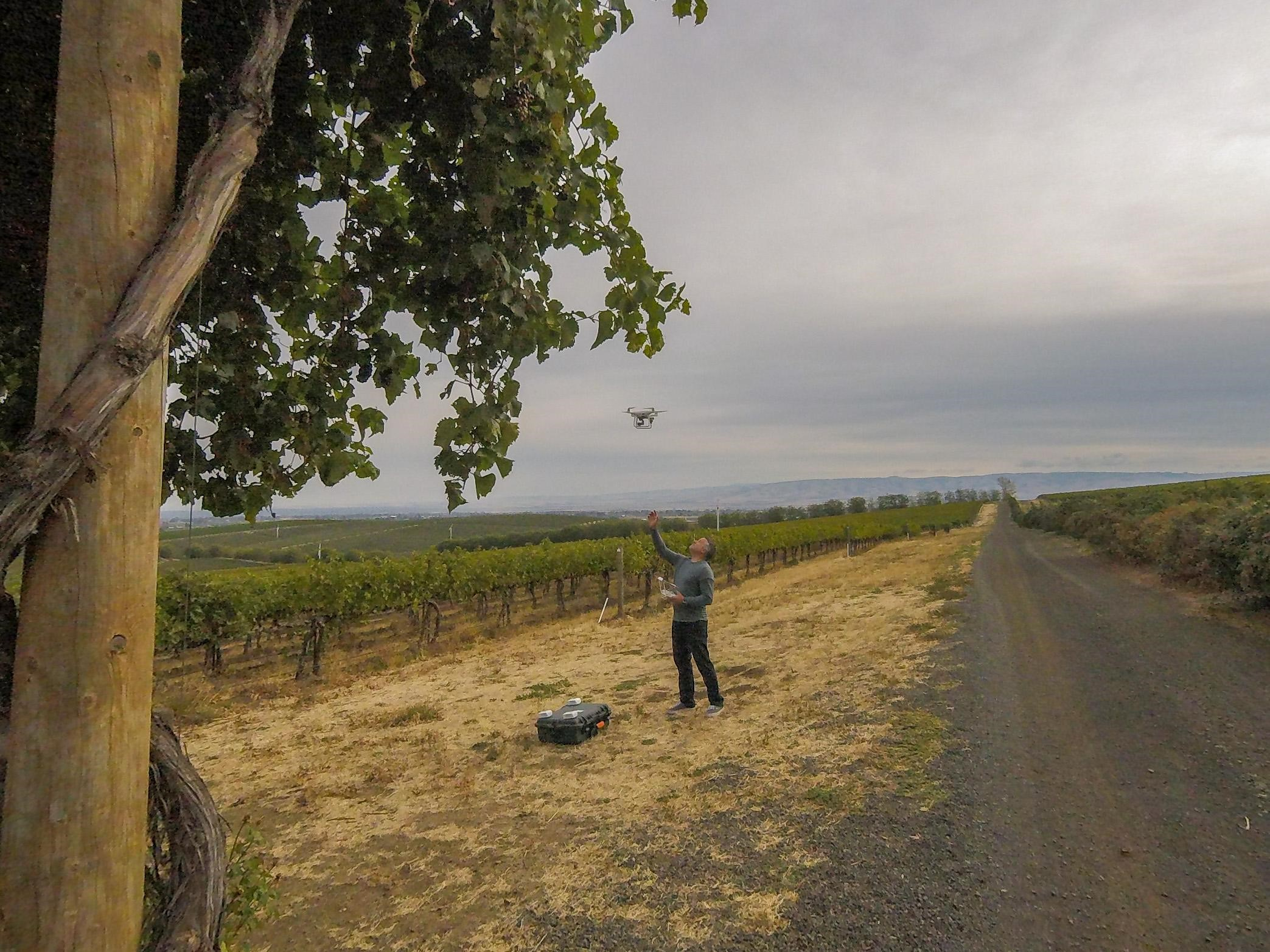 Flying Drones over wine grapes